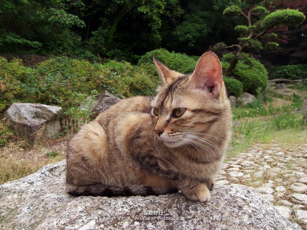 1024 768 サイズ無料 高画質 デスクトップ壁紙 公園の猫