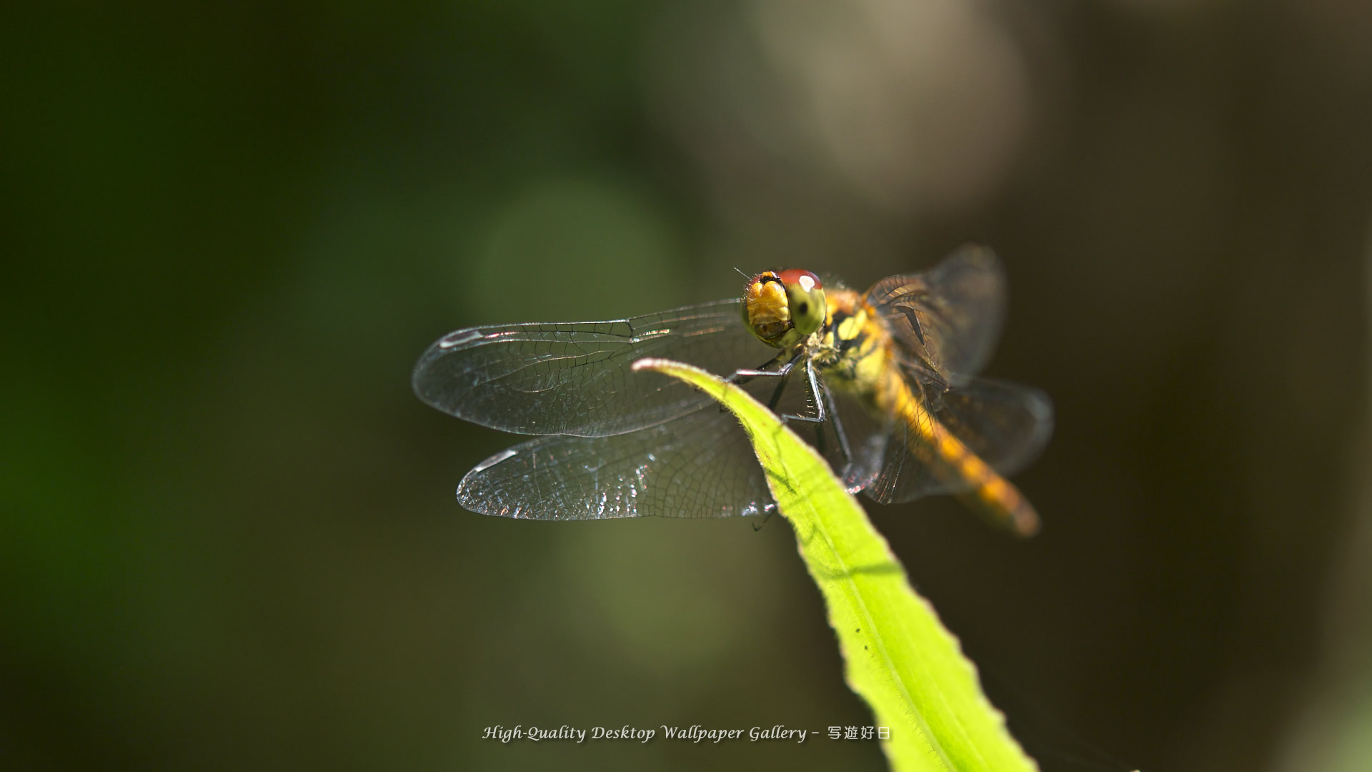 Insect wallpaper - 52715