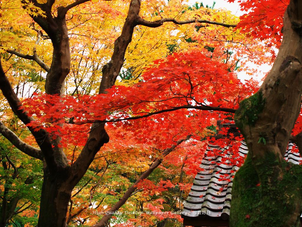京都の紅葉の壁紙/Wallpaper of Autumn Color in Kyoto (1024×768